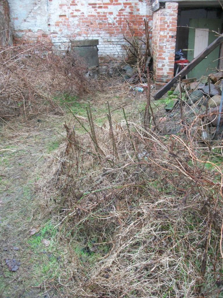 Innenhof 2011